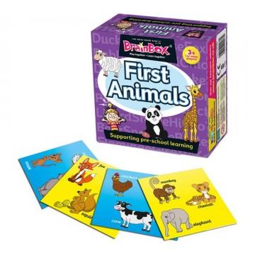 BrainBox - First Animals